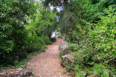 Pathway among Trees. View of ground pathway among green trees and folige with dead leaves on the ground Stock Images
