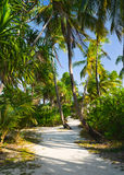 Pathway in tropical jungle royalty free stock photos