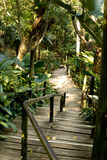 Pathway through tropical jungle Royalty Free Stock Photo