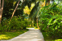 Pathway in tropical park Stock Image