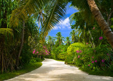 Pathway in tropical park Royalty Free Stock Images