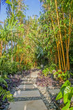 Pathway in tropical park, vertical picture Stock Images