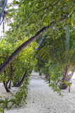 Pathway in tropical vegatation, Maldives Royalty Free Stock Photos