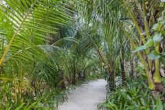 Pathway in tropical vegatation, Maldives. Pathway in tropical vegetation, Kuramathi island, Rasdhoo atoll, Maldives royalty free stock photography