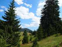 A pathway trough dense pine fores Stock Photo