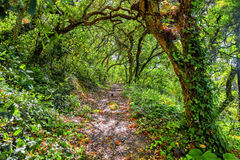 Pathway trough a wild forest. Path into an old forest at summer Royalty Free Stock Photo