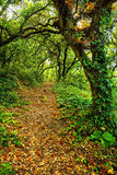 Pathway trough a wild forest. Path into an old forest at summer Stock Images