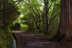 Pathway trought the forest along the levada Stock Photos