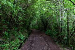 Pathway trought the forest along the levada Stock Photography