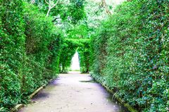 The pathway and two green trees. With fountain in the middle royalty free stock photography