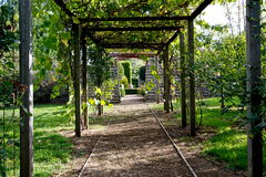Pathway under arbour. Royalty Free Stock Image