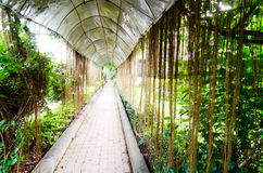 Pathway under ivy Royalty Free Stock Images