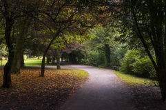 Pathway under trees. Pathway covered by trees in a park near Buxton England Stock Images