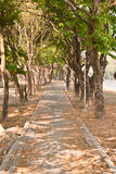 Pathway under the trees Royalty Free Stock Photo