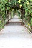 Pathway in the vegetable garden. Stock Photo