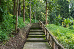 Pathway in the village. Green Pathway in the village Royalty Free Stock Photo