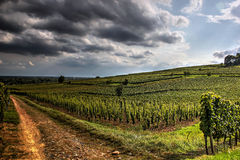 A pathway through the vineyards Royalty Free Stock Photo