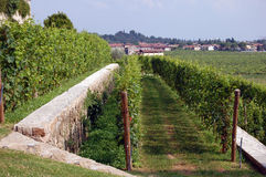 Pathway at Winery Royalty Free Stock Photo