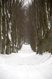 Pathway at winter Stock Image