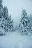 Pathway on the winter forest. Taganay. Russia Royalty Free Stock Photo