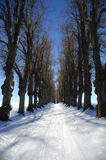 Pathway at winter Royalty Free Stock Images