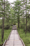 Pathway. A wooden path in the forest Royalty Free Stock Photo