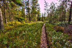 Pathway through the woodlands Stock Photography