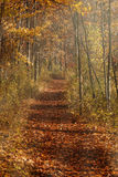 Pathway into the woods Royalty Free Stock Image