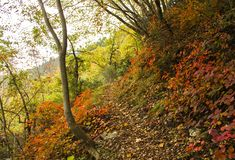 Pathway in the woods in autumn. A trekking Woodpath in autumn in italy, at Genga near the Frasassi caves Stock Images