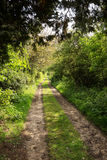 Pathway in woods Royalty Free Stock Image