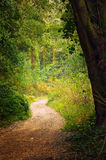 Pathway in the Woods. Fall scenery with a pathway in beautiful forest in the hills Stock Images