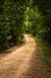 Pathway in the Woods royalty free stock image