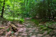 Pathway in Woods Royalty Free Stock Photography