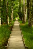 Pathway through the Woods, Maine royalty free stock photo