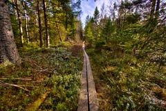 Pathway through the woods Stock Photo