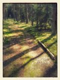 Pathway through the woods. Trees casting a shadow on a pathway through a wood or forest Stock Photography