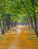 Pathway with yellow flowers Stock Photos