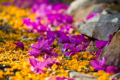 Pathway with yellow and purple flowers Royalty Free Stock Photos