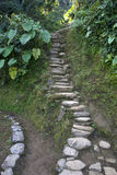Pathways, Ciudad Perdida (Lost City), Columbia Royalty Free Stock Photo