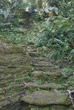 Pathways, Ciudad Perdida (Lost City), Columbia Royalty Free Stock Photography