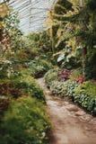 Pathways. Green greenhouse garden flowers Stock Photo