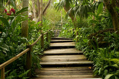 Pathways in the jungle. MS: Wooden pathway through the Tropical palms and wild orchids in a tropical jungle. Fiji royalty free stock photography