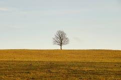 Patiencebaum auf der Wiese stockbilder