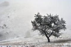 Patienceboom op de mistige heuvel Royalty-vrije Stock Foto
