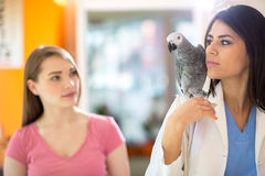 Patient parrot going with veterinarian to do exam Stock Image