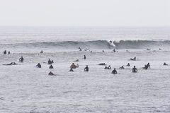 Patiently waiting. Surfers waiting for waves Royalty Free Stock Image