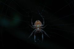 Patiently waiting. Spider, web, night, trap Royalty Free Stock Images