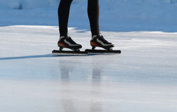 Patin Photographie stock