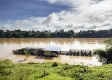Patin ryby klatki hodowla przy rzeką fotografia royalty free