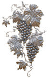 Patine d'or de raisins Photo stock